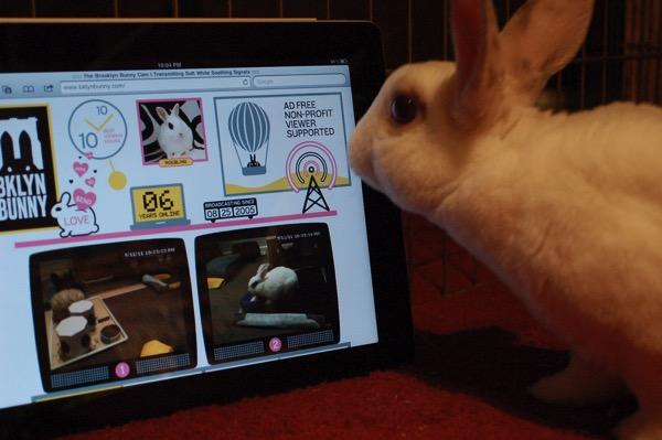 Ipad bunny 20150503