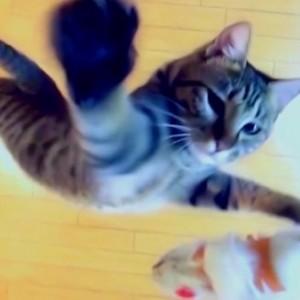 tobu_neko_20121112.jpg