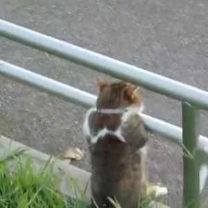 yugure_cat20120914.jpg